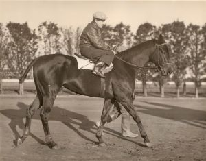 War_Admiral_workout.jpg